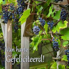 Heerlijke Druiven