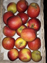 Welland appels  prijs per kg minimale afname 12 kg