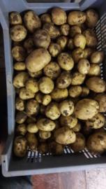 Brabantse Klei Aardappelen Bintje