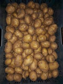 Brabantse Klei Aardappelen Frieslander