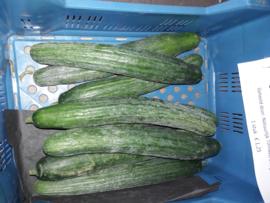 Biologische  komkommer klasse 2