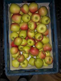 Delcorf appels  prijs per kg minimale afname 1 kist 10- 12 kg oogst 2019