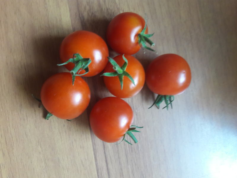 Biologische  cherry tomaten kist a 4 kg