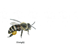 Correspondentiekaart Honingbij  25 stuks