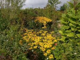Workshop tuin bij-vriendelijk maken  14 september 2019