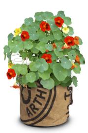 Kweektuin klein met diverse soorten bloemen