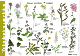 Herkenningskaart Planten voor Bijen