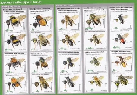 Bijen zoekkaart