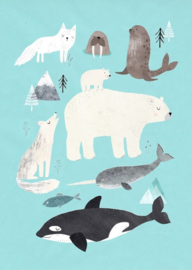 Postcard Artic animals