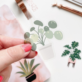 Plant sticker  -Pannenkoekplant-