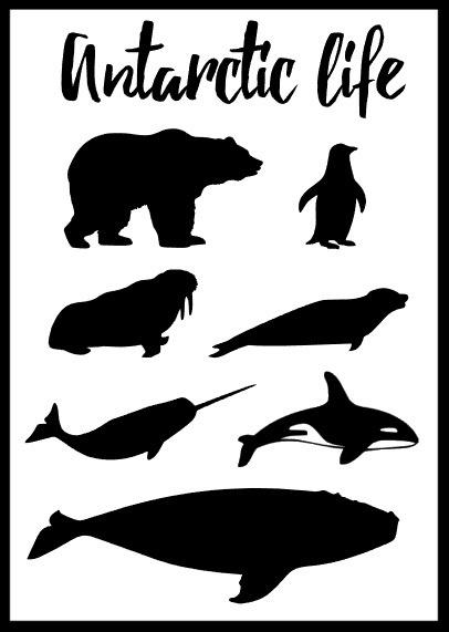 Antarctic life poster