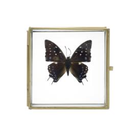 Gouden doosje met vlinder