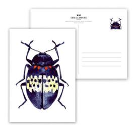 Kaart Blue Beetle
