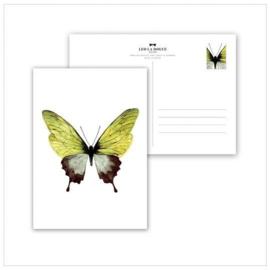 Kaart Green Butterfly