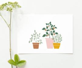 Kaart 3 planten