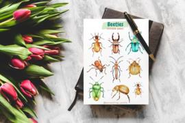Stickervel Beetles