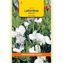 Lathyrus  Siererwt Royal Wit