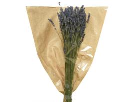Lavendel op stam