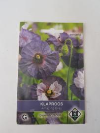 Klaproos - Amazing Grey