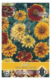 Zinnia angustifolia Persian Carpet - Zinnia