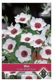 Linum grandiflorum Bright Eyes  Vlas