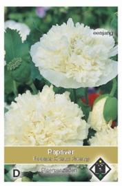 Papaver paeoniflorum Cream Paeony - Klaproos