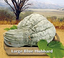 Pompoen Large Blue Hubbard