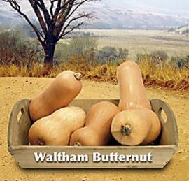 Pompoen Waltham Butternut