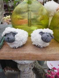 Kleine schaapjes