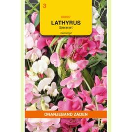Lathyrus  Siererwt Overblijvend