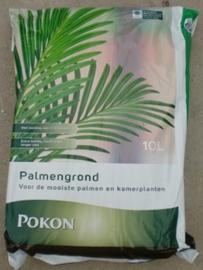 Palmgrond