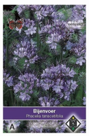 Phacelia tanacetifolia - Groenbemester - Bijenvoer