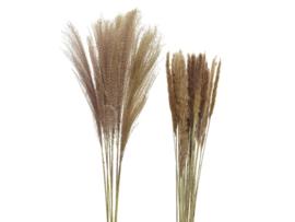 Bundel met gras op stam - 2 assorti