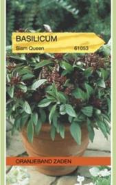 Basilicum 'Siam Queen'