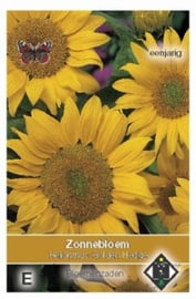 Helianthus Golden Hedge  Zonnebloem