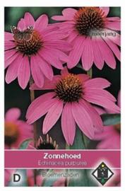 Echinacea purpurea - Zonnehoed - vaste plant