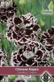 Dianthus chinensis Chianti - Dubbele zwarte anjer