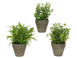 Plant in pot - plastic