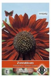 Helianthus Velvet Queen  Zonnebloem