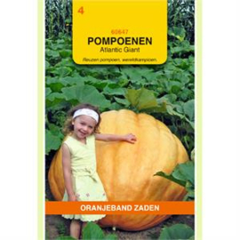 Pompoen Atlantic Giant
