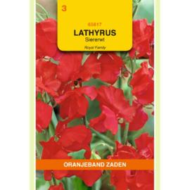 Lathyrus Siererwt Royal Rood