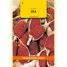 Aardbeienmais Mais Zea Maiskolf