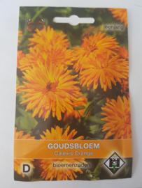 Goudsbloem - Calexis Orange