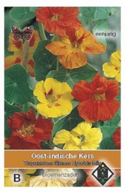 Tropaeolum Gleam Hybrids Mix