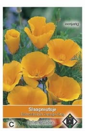 Eschscholzia 'Orange King'   Slaapmutsje