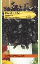 Basilicum Dark Opal