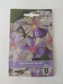 Klimmende Winde - Ipomoea Venice Blue