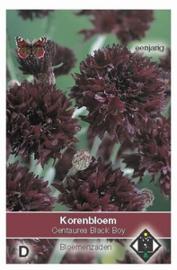 Centaurea Black Boy  Korenbloem zwart