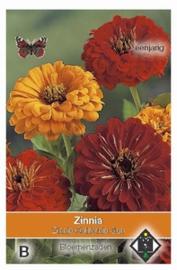 Zinnia elegans California Sun - Zinnia