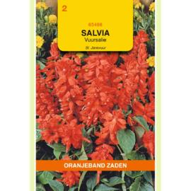 Salvia - Vuursalie Jansvuur